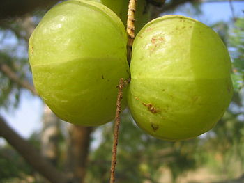 fruit d'amla; amla fruit