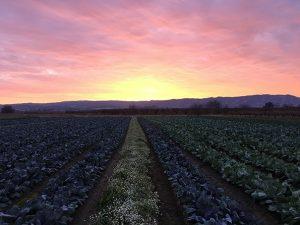 Terra Firma Feild Sunset